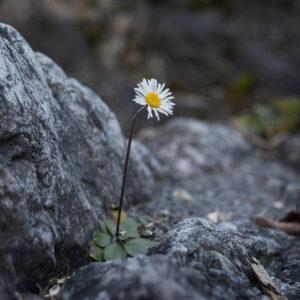 A Plant in Rocky Soil | Homeschooling Torah